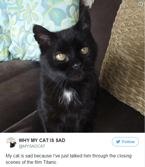 Cat - oe WHY MY CAT Is SAD Follow @MYSADCAT My cat is sad because I've just talked him through the closing scenes of the film Titanic