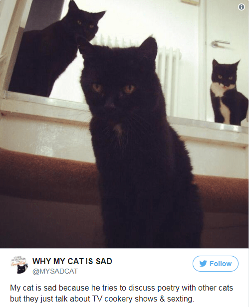Cat - WHY MY CAT Is SAD Follow @MYSADCAT My cat is sad because he tries to discuss poetry with other cats but they just talk about TV cookery shows & sexting.