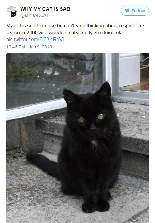 Cat - WHY MY CAT IS SAD Follow @MYSADCAT My cat is sad because he can't stop thinking about a spider he sat on in 2009 and wonders if its family are doing ok. pic.twitter.com/Bj33jcR1VI 10:46 PM - Jun 9, 2015