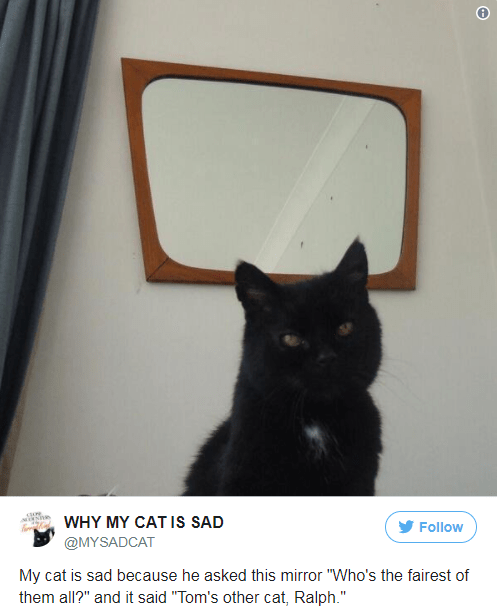 """Cat - he WHY MY CAT IS SAD Follow @MYSADCAT My cat is sad because he asked this mirror """"Who's the fairest of them all?"""" and it said """"Tom's other cat, Ralph."""""""