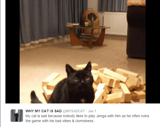 Cat - WHY MY CAT IS SAD @MYSADCAT Jan 1 My cat is sad because nobody likes to play Jenga with him as he often ruins the game with his bad vibes & clumsiness.