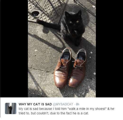 """Footwear - WHY MY CAT IS SAD @MYSADCAT 8h My cat is sad because I told him """"walk a mile in my shoes!"""" & he tried to, but couldn't, due to the fact he is a cat."""