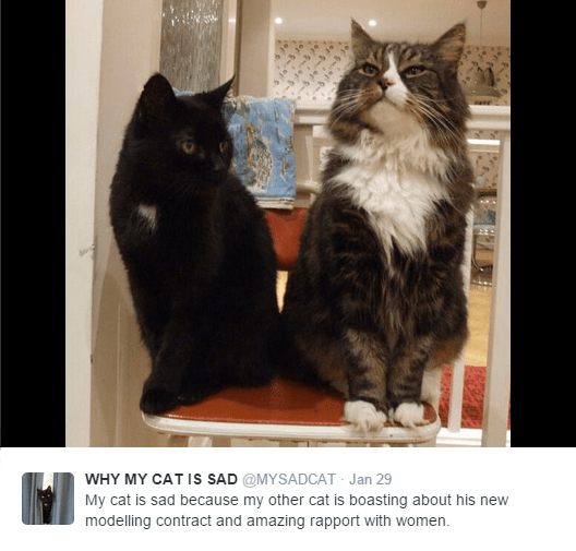 Cat - WHY MY CAT Is SAD @MYSADCAT Jan 29 My cat is sad because my other cat is boasting about his new modelling contract and amazing rapport with women.