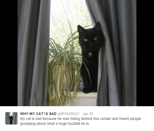 Cat - WHY MY CAT IS SAD @MYSADCAT Jan 29 My cat is sad because he was hiding behind this curtain and heard people gossiping about what a huge buzzkill he is.