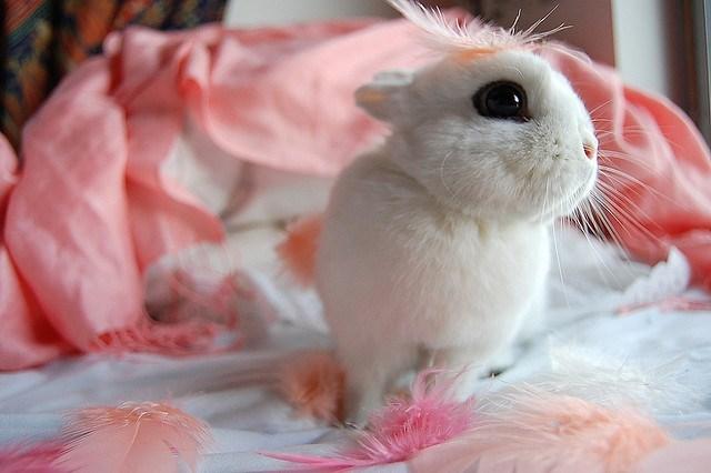 Pink adorable bunny