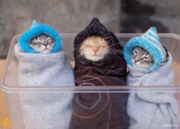 Cat - spynet.ru