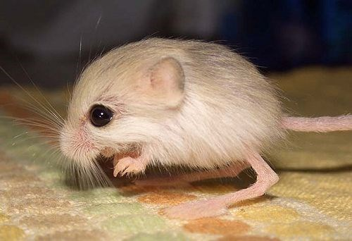 cute little mouse