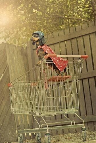 Shopping cart dog