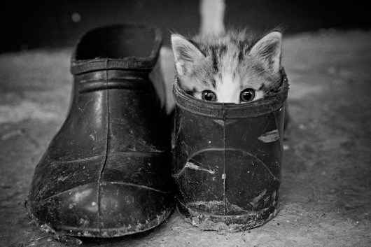 cat hiding in shoes