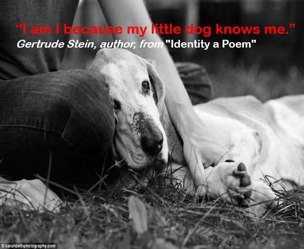 """Canidae - lam I becaue my little dog knows me."""" Gertrude Stein, author, from """"Identity a Poem"""" o sarahbethphotography.com"""