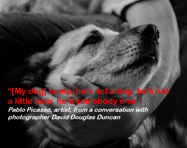 """Dog breed - """"IMy dagmp hels not a little a hesomebody eiseot 9 hes not Pablo Picasso, artist, from a conversation with photographer David Douglas Duncan"""