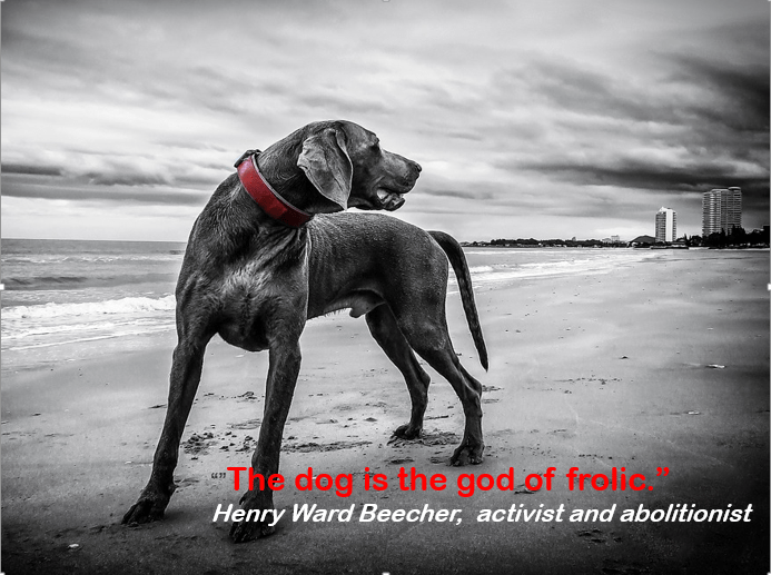 Dog - The dog ts the god of frolic Henry Ward Beecher, activist and abolitionist