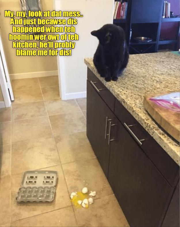 Memes Cats funny - 9065238528