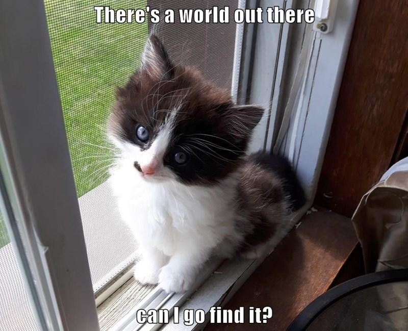 lolcats Cats funny - 9065240320