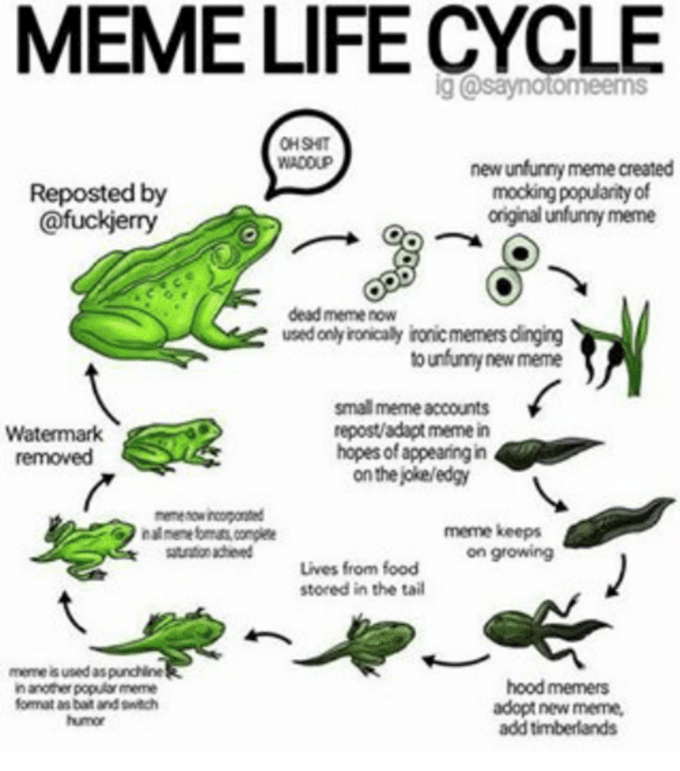 Frog - MEME LIFE CYCLE ig@saynotomeems OH SHIT WADOUP new unfunny meme created mocking popularity of original unfunny meme Reposted by @fuckjerry dead meme now used only ironicaly ironicmemers clinging to unfunny new meme small meme accounts repost/adapt meme in hopes of appearing in on thejoke/edgy Watermark removed memenowincopoted nal mene fomats complee atration achieved meme keeps on growing Lives from food stored in the tail meme is used as punchine in another popular meme format as bait a