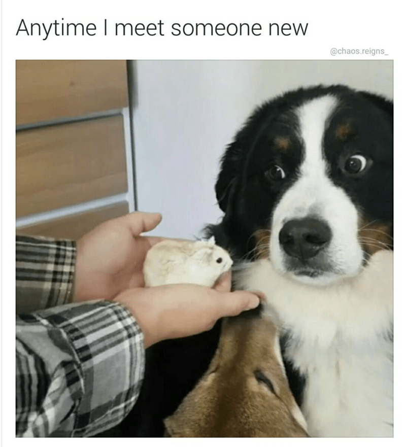 Dog - Anytime meet someone new @chaos.reigns_