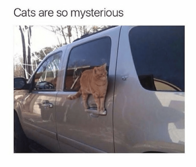 Vehicle - Cats are so mysterious