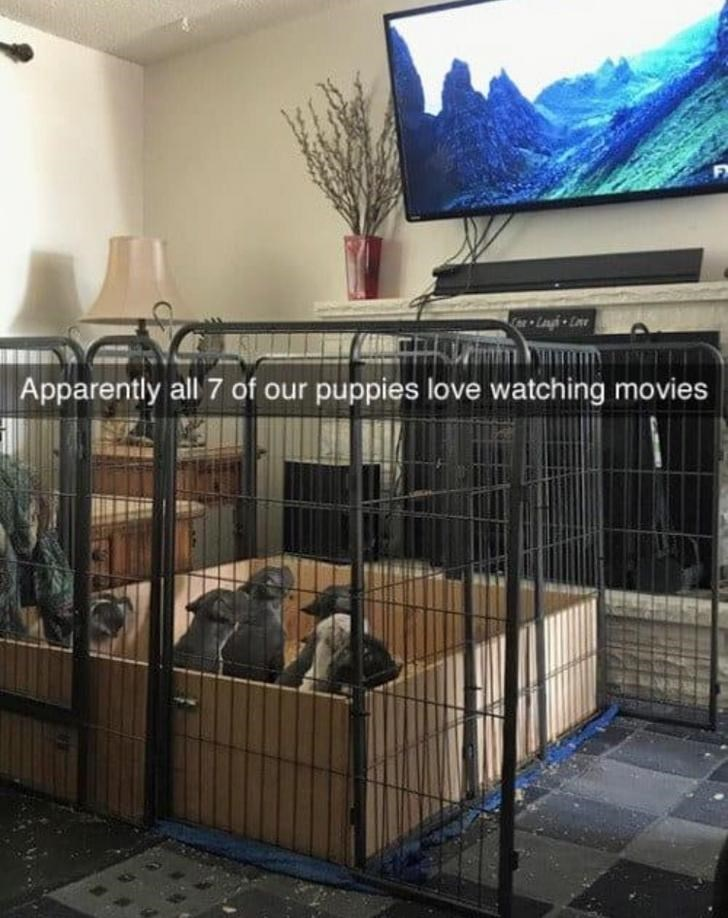 Iron - Lah Apparently all 7 of our puppies love watching movies