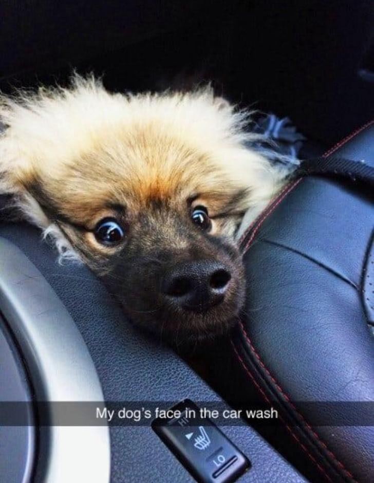 Dog - My dog's face in the car wash LO