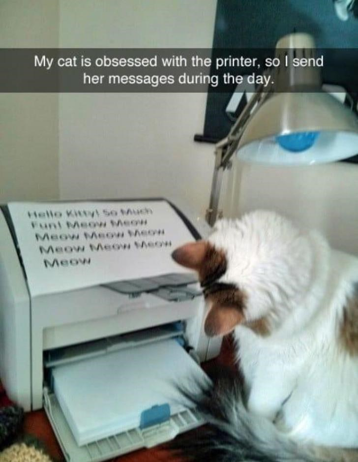 Cat - My cat is obsessed with the printer, so I send her messages during the day. Hello Kithy So Much Funt Meow eow Meow Meow heo Meow Meow eow Meow