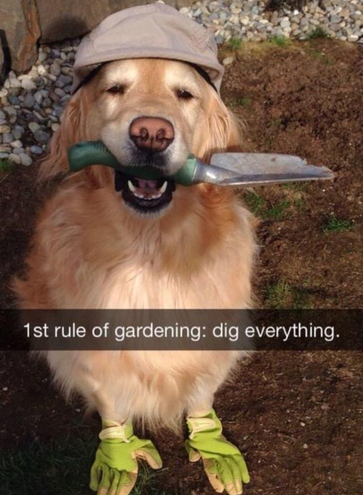 Dog - 1st rule of gardening: dig everyth ing