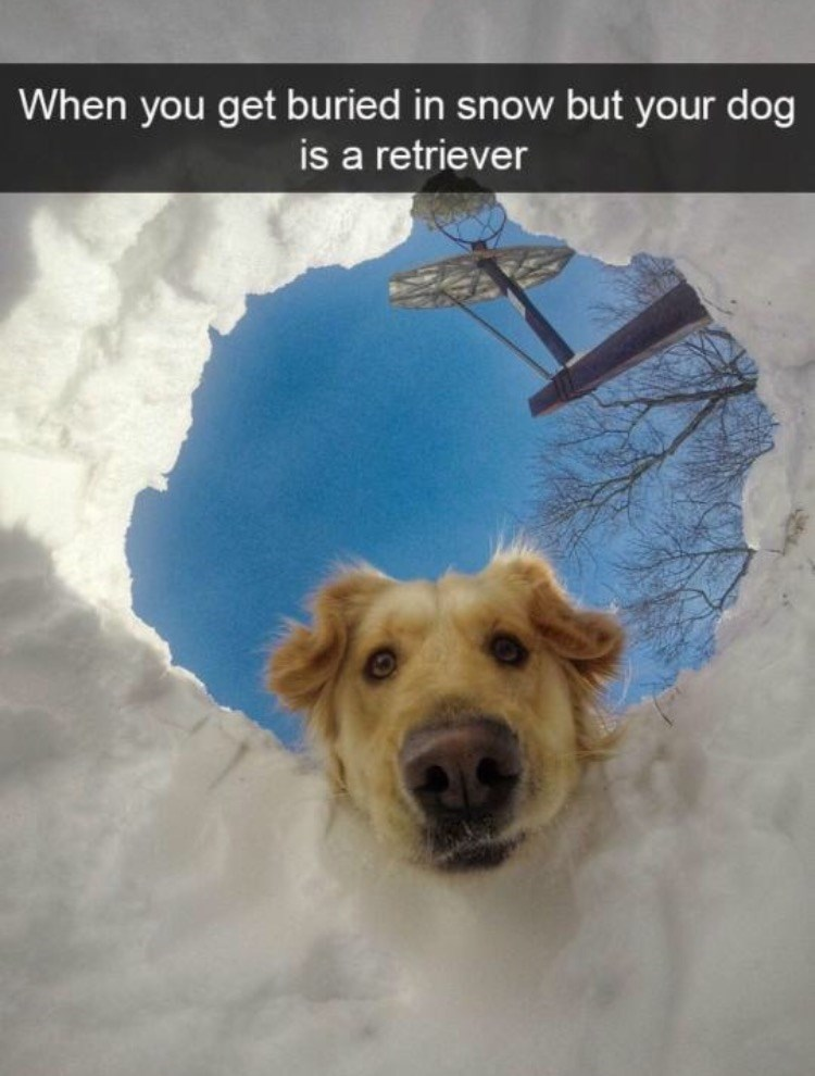 Dog - When you get buried in snow but your dog is a retriever