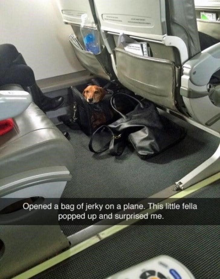 Vehicle - Opened a bag of jerky on a plane. This little fella popped up and surprised me.