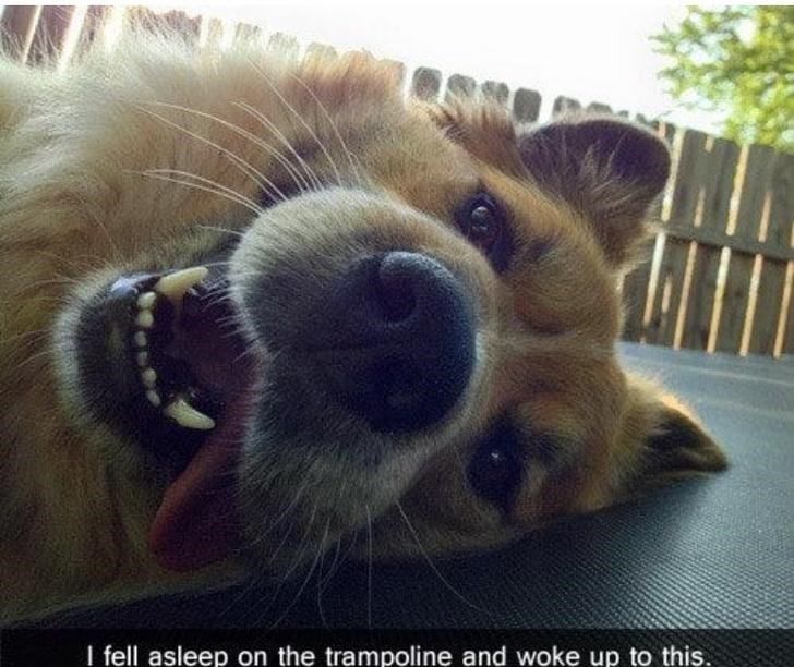 Nose - I fell asleep on the trampoline and woke up to this.