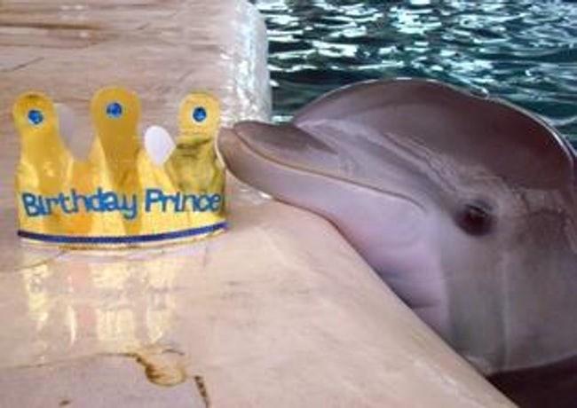 happy birthday - Common bottlenose dolphin - Burthday Prince
