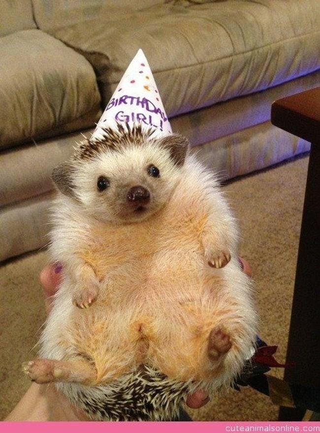 happy birthday - Hedgehog - EIRTHO IRI cuteanimalsonline.com