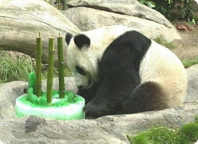 happy birthday - Panda