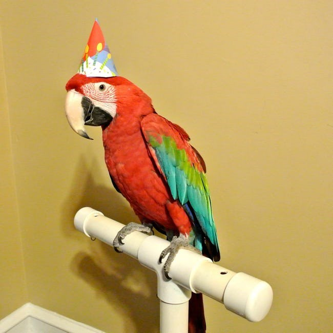 happy birthday - Bird