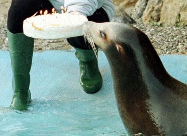 happy birthday - Seal