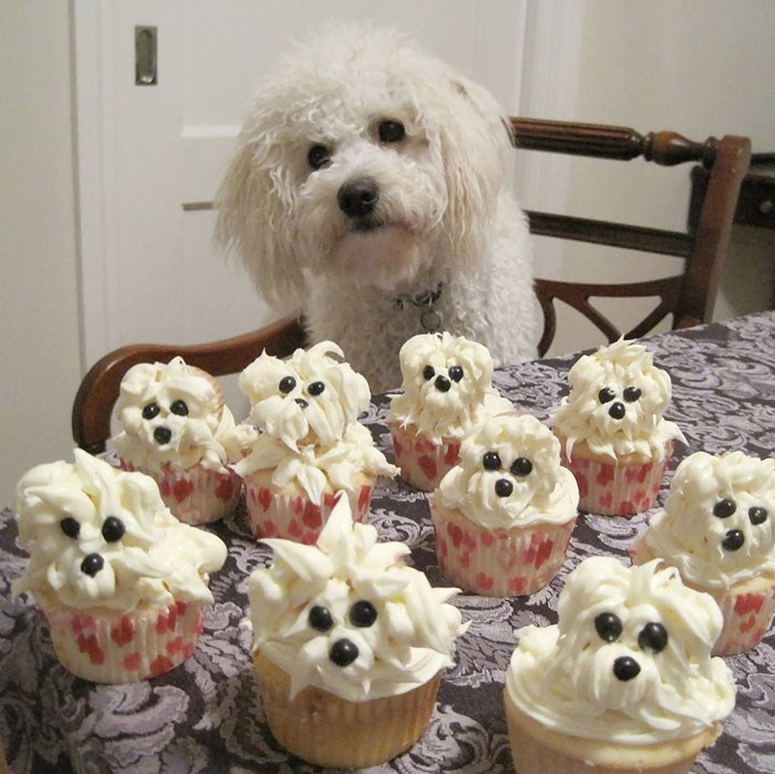 happy birthday - Dog