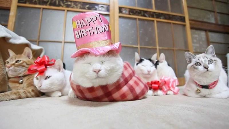 happy birthday - Cat - HAPPY BIRTHDAY