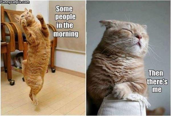 Memes Cats funny - 9065627392