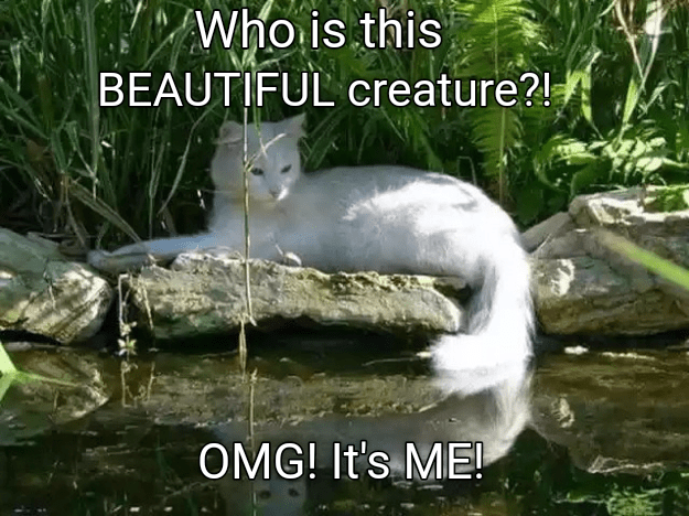 Water resources - Who is this BEAUTIFUL creature?! OMG! It's ME!