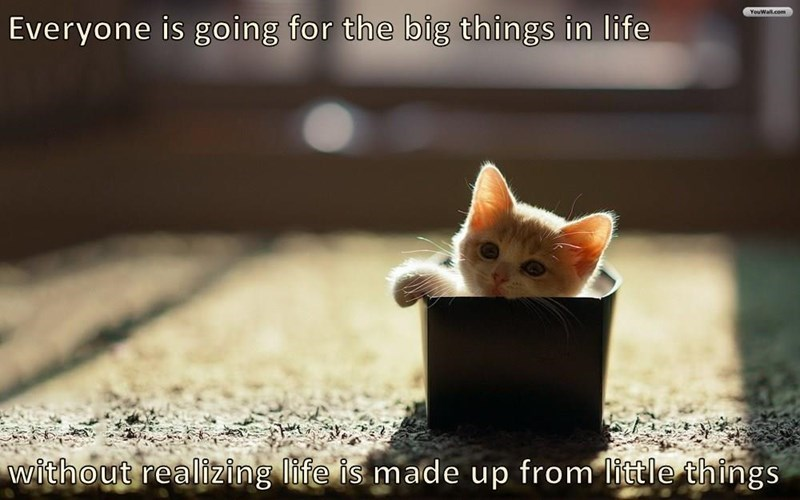Cat - YouWal.com Everyone is going for the big things in life without realizing life is made up from little thirngs