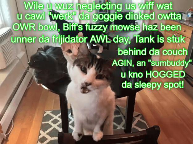 "Photo caption - Wile u wuz neglecting us wiff wat u cawl werk' da goggie dinked owtta OWR bowl, Biff'S fuzzy mowse haz been unner da frijidator AWL day, Tank is stuk behind da couch AGIN, an ""sumbuddy"" u kno HOGGED da sleepy spot!"