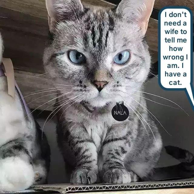 Cat - I don't need a wife to tell me how wrong I am. I have a cat. NALA
