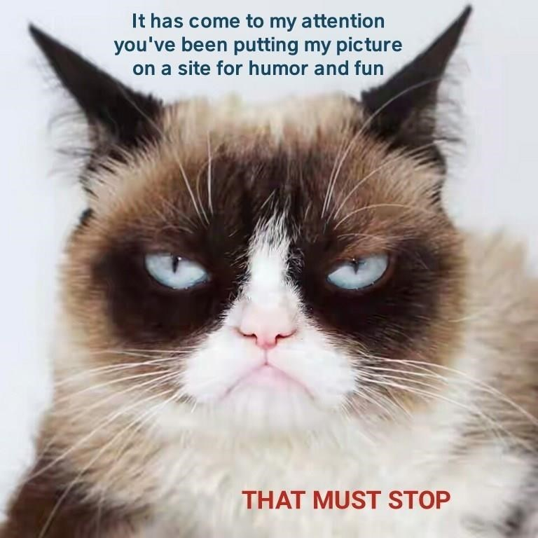 Cat - It has come to my attention you've been putting my picture on a site for humor and fun THAT MUST STOP