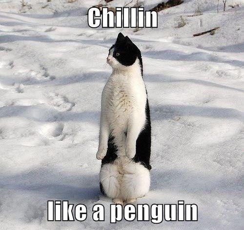 Photo caption - Chillin like a penguin