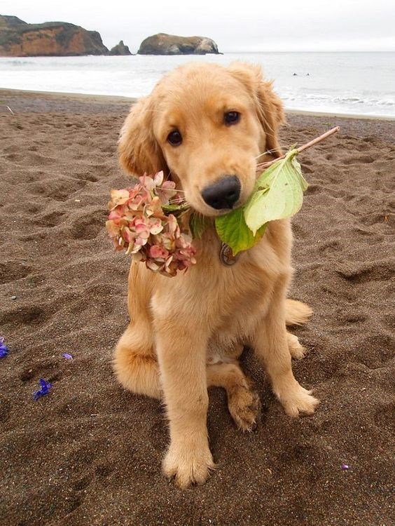 flower dog - Dog