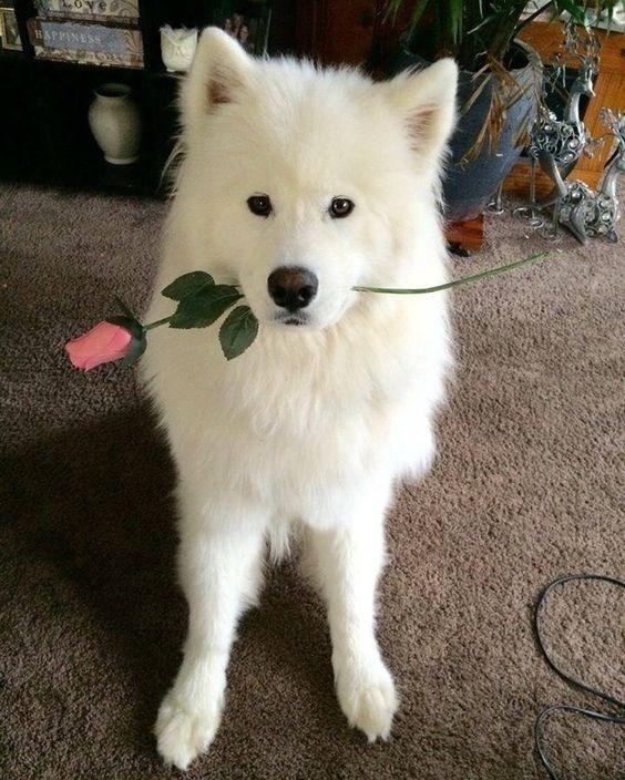 flower dog - Dog - HAPPINESS