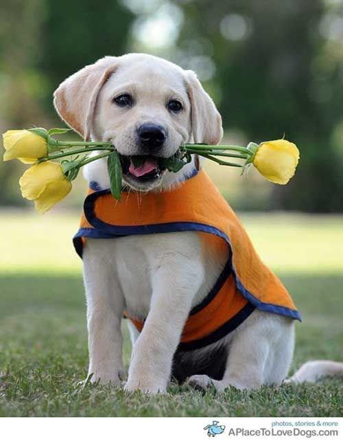 flower dog - Dog - photos, stories &more APlaceTo Love Dogs.com