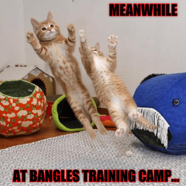 cute Cats funny - 9065740544