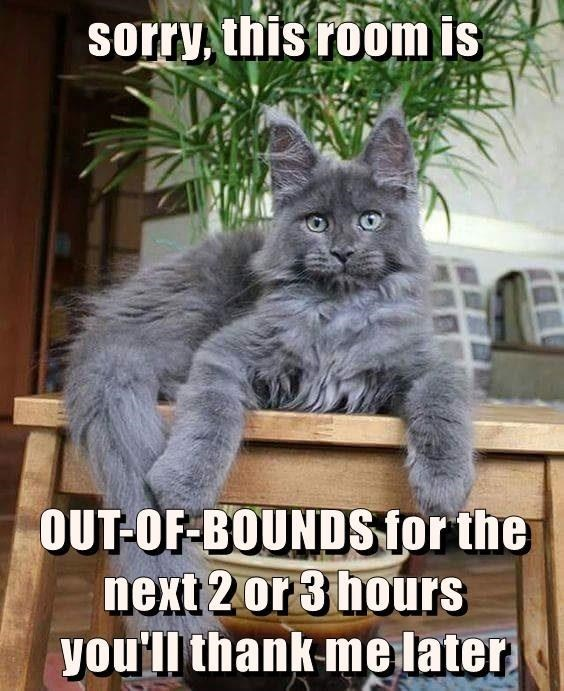 Memes Cats funny - 9065742592