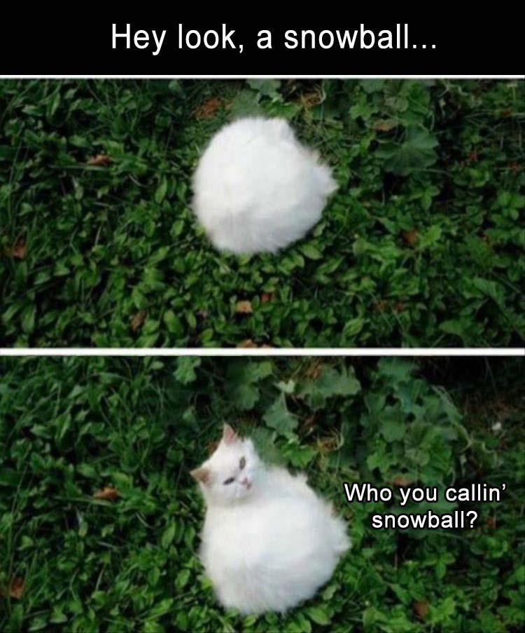 Memes Cats - 9065771264