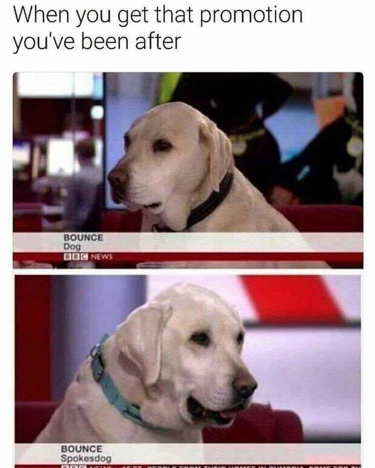 Funny meme about a dog getting a promotion.