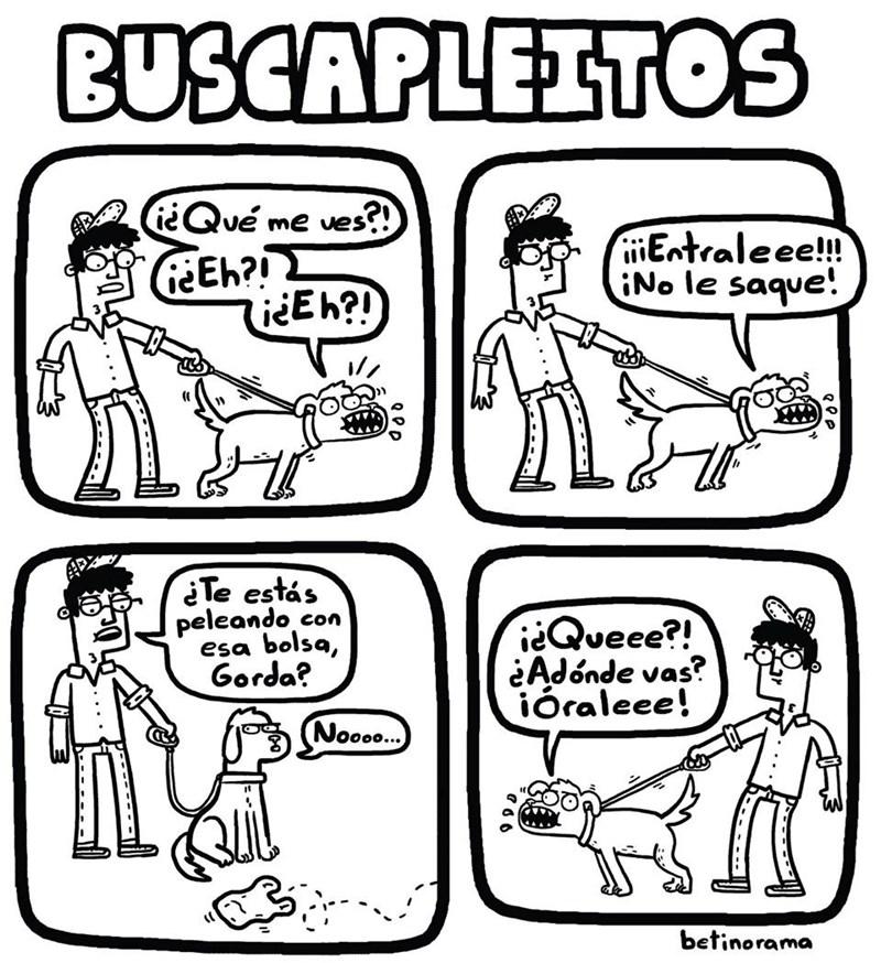 perritos siempre buscan problemas con lo que sea